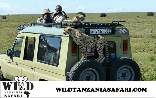 Wild Tanzania Safari And Adventures