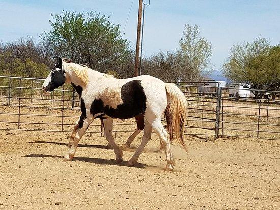 Spencers Rocken Horses: Led Zepplin