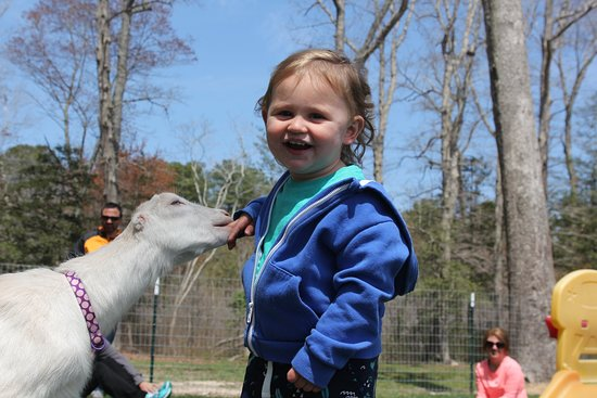 Harbeson, DE: Goat Socials are for all ages.  Learn about many breeds and get to play with our goats.