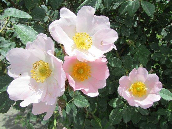 Sardarapat Memorial: Цветы