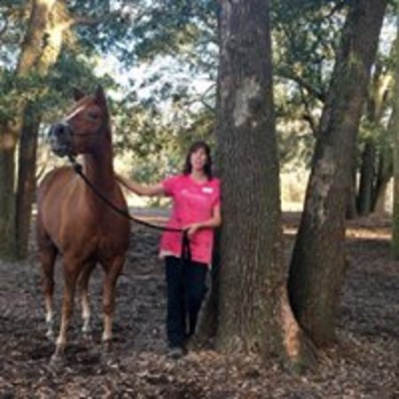 Horses for adoption