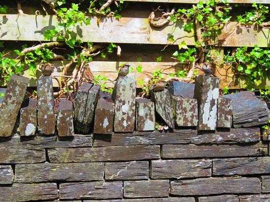 Bryncrug, UK: sparrows