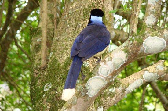 Iguazu Falls: Besuch der...