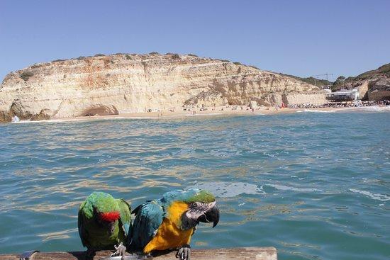 Algarve Discovery Foto