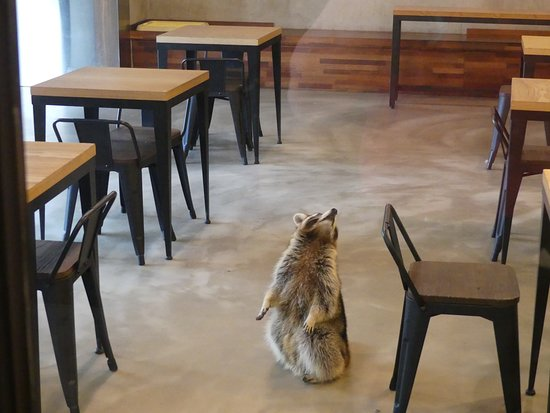 Maengkun Raccoon Cafe