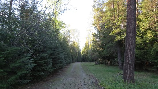 Troy, Montana: Path to the river from campground.