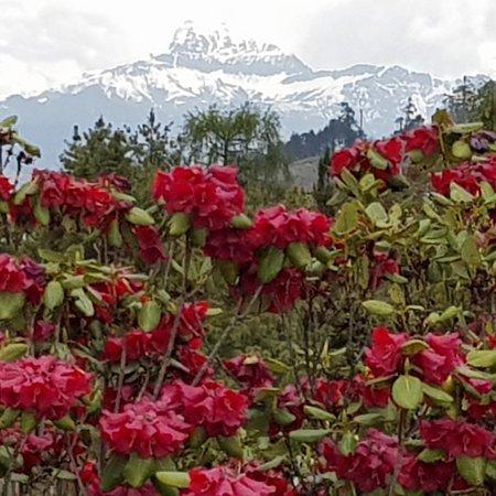 Gangtey, ภูฏาน: photo2.jpg