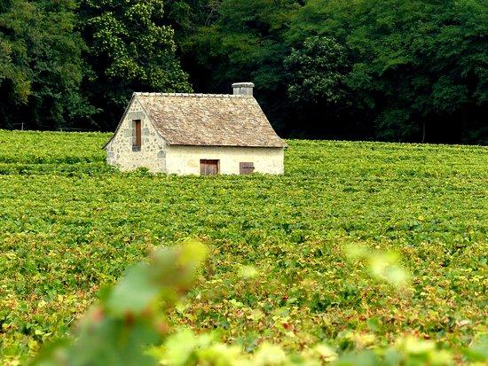 Restigne, França: Loge de vigne