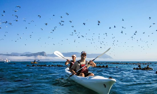 Kayak Cape Town: We see many different seabirds on our trip