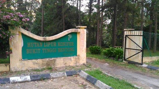 Janda Baik, Malaysia: Coniferous Forest