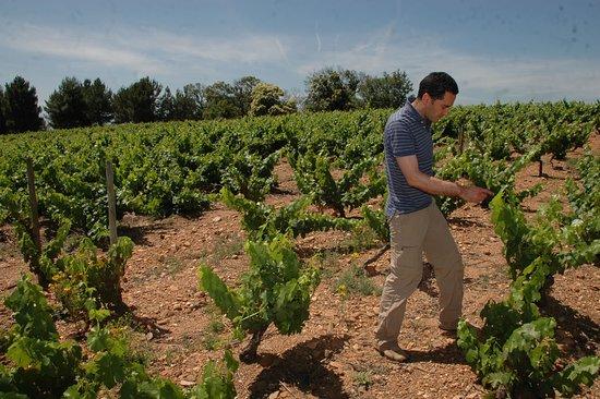 Villafranca del Bierzo, Spanyol: Paseo por.uno de los viñedos de mayor valor de Europa