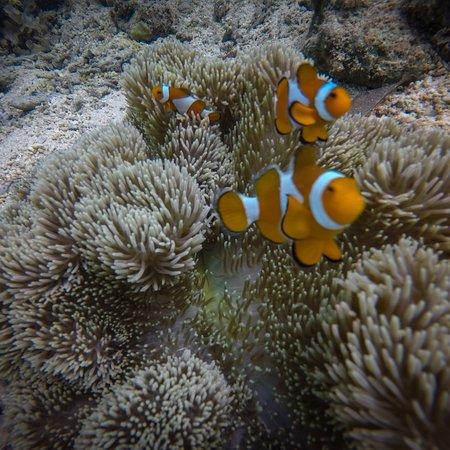 Coral Garden: Nemo!