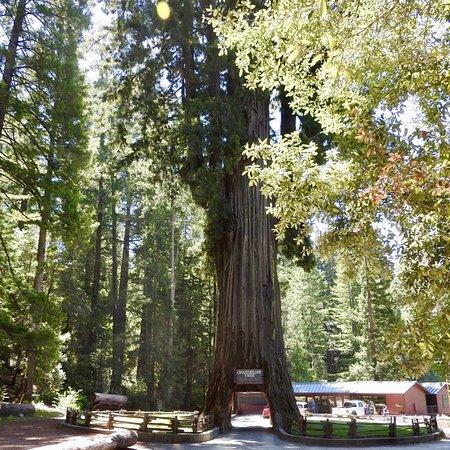 Leggett, Kalifornien: photo1.jpg