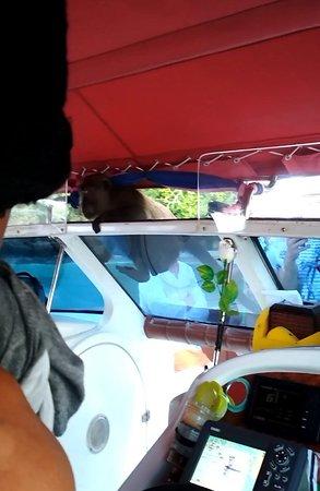 Monkey Beach: Наглая обезьянка запрыгнула к нам на катер.