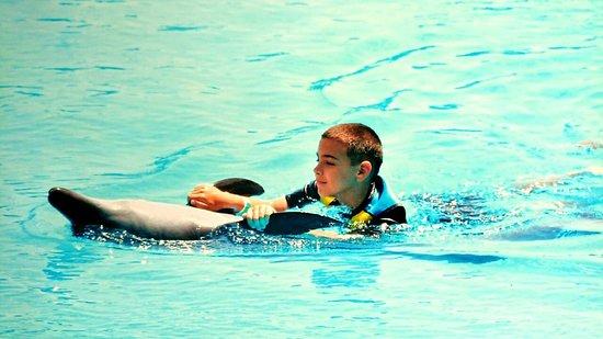 Dolphin Bay: Nikic Montenegro