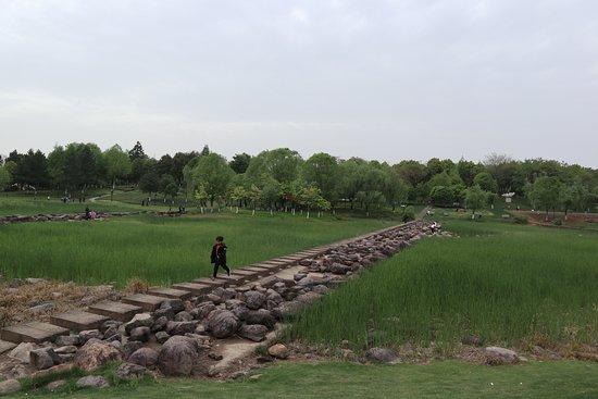 Futian Wet Land Park