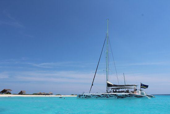 Black And White In The Crystal Clear Water Of Klein Curacao With The