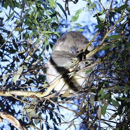 Hanson Bay, Австралия: photo2.jpg