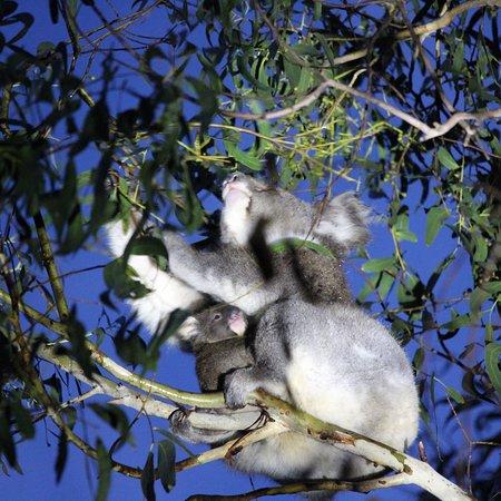 Hanson Bay, Австралия: photo3.jpg