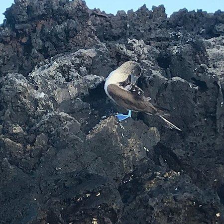 Galápagos on the Petrel w/ Haugan Cruises