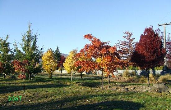 Twizel Walkway: Autumn colours play