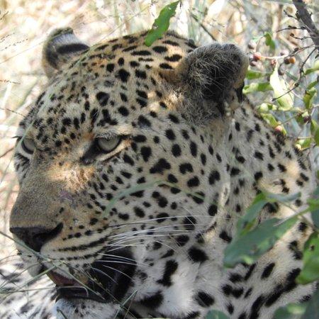 Частный заповедник Маньелети, Южная Африка: photo6.jpg