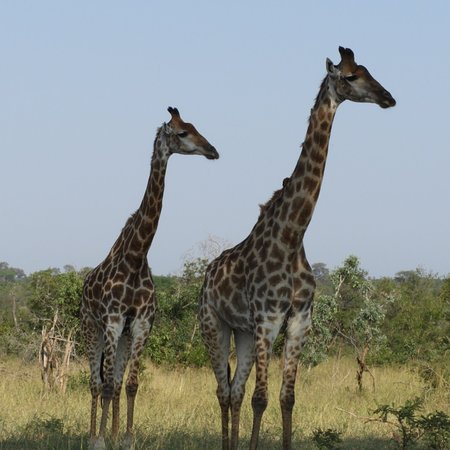 Manyeleti Game Reserve, África do Sul: photo7.jpg