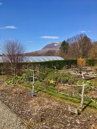 Torridon, UK: the kitchen garden (in early April)