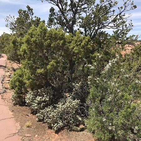 Navajo National Monument: photo2.jpg