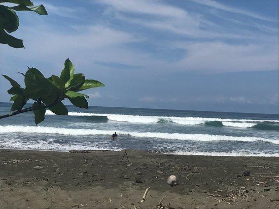 Playa Matapalo, Costa Rica: plage à 50m