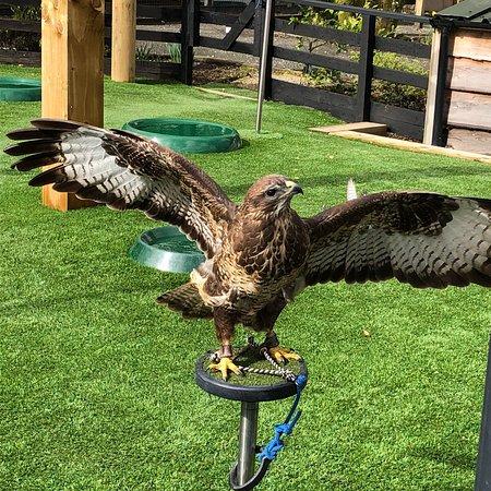 Loch Lomond Bird of Prey Centre: photo0.jpg