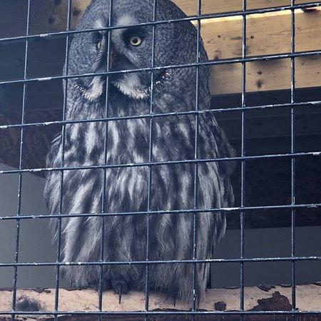 Loch Lomond Bird of Prey Centre: photo2.jpg