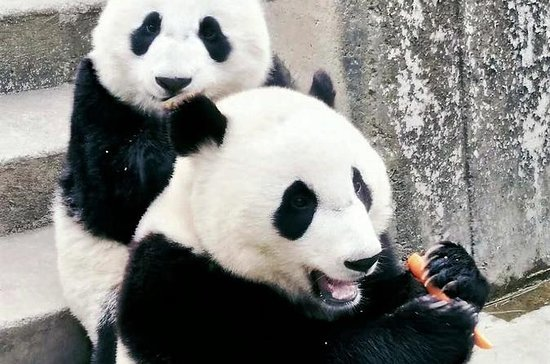Private Day Tour til Xian Zoo...