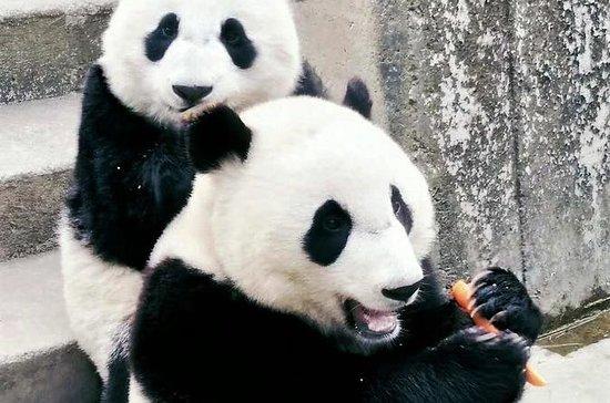 Excursão privada ao zoológico de...