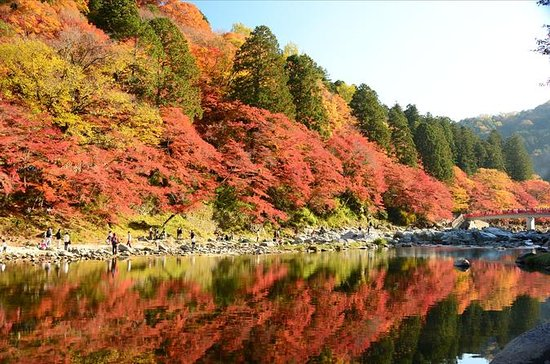 Autumn Foliage: Day Trip to Korankei...