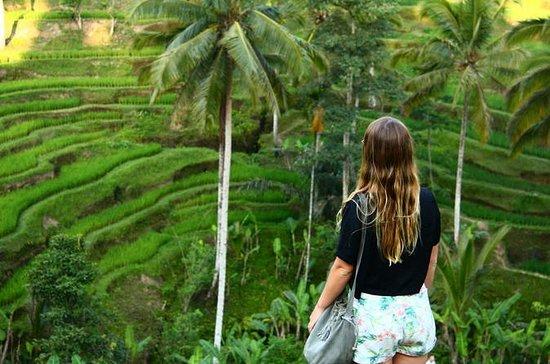 Halvdag UBUD: Monkey Forest, Rice...