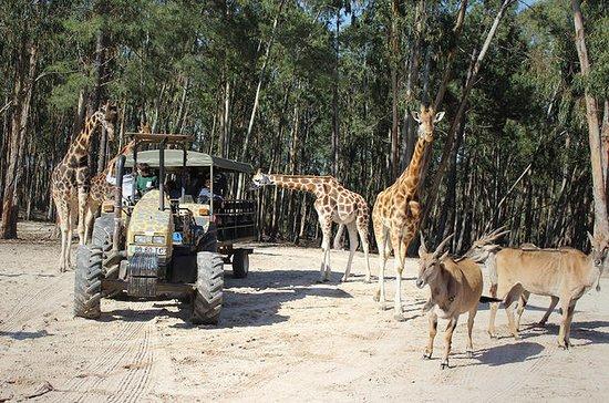 Badoca Safari Park Entrance Ticket