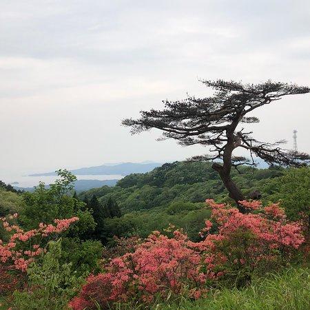 Minamisanriku-cho, ญี่ปุ่น: photo1.jpg