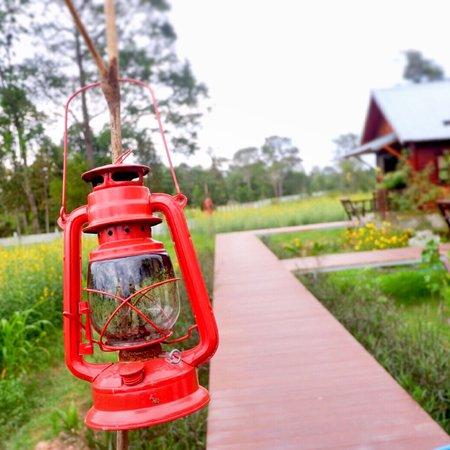 Prasat, Tailandia: ทุ่งดอกปอเทืองสวยงามตา ดอกสีเหลืองแซมใบเขียวมองแล้วสบายตา ในวันที่มีเมฆฝนครึ้ม อีกฝากฝั่งเป็นทุ่