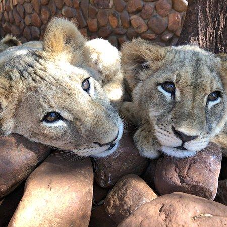 Ukutula Lion Park: photo6.jpg