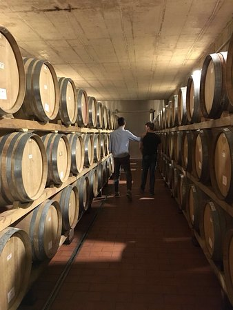 Poggio al Sole: Inside the beautiful wine cellar