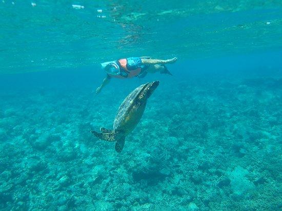 Makunudu Island: Snorkelling with a huge turtle