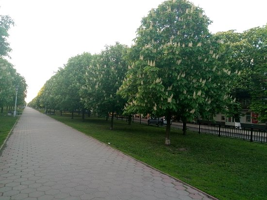 The Сhestnut Alley