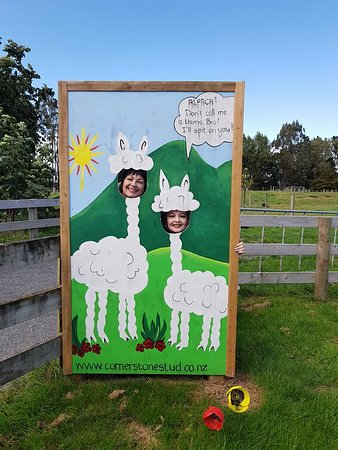 Gordonton, Новая Зеландия: Fun at cornerstone alpacas!