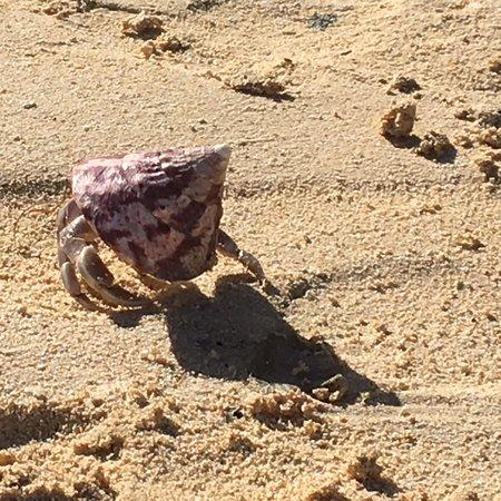Muri Beach Resort: Fauna