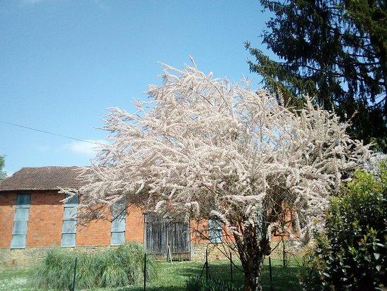 Saint-Avit-Senieur, ฝรั่งเศส: Le tamaris de printemps - jardin