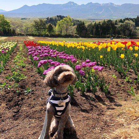 Foto de Nasu Flower World