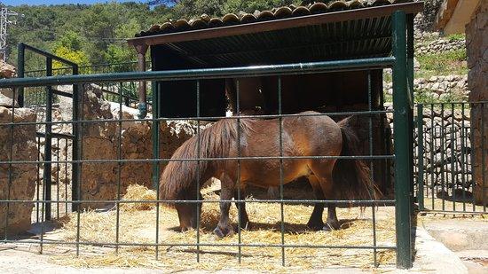 Esporles, Spanien: Un pony con muy poco espacio para moverse