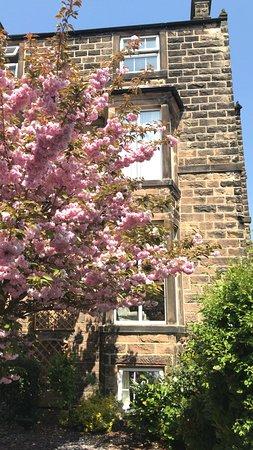 Gorgeous blossom outside Sheriff Lodge