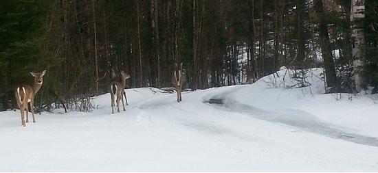 Harcourt, Kanada: Nomi Deer Family